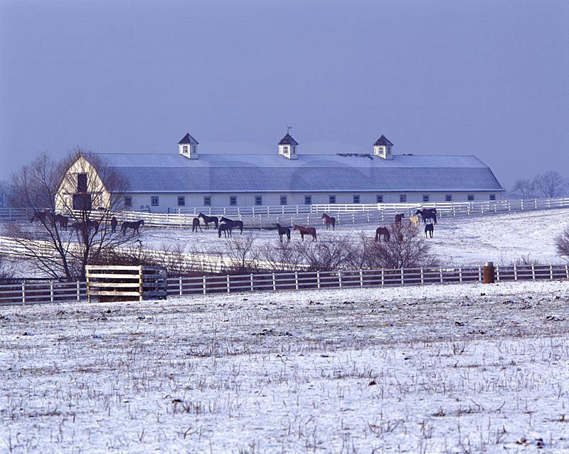Barn And Horses in Snow