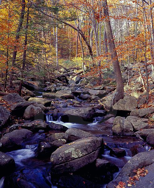 Trout Brook In Autumn, Hacklebarney State Park